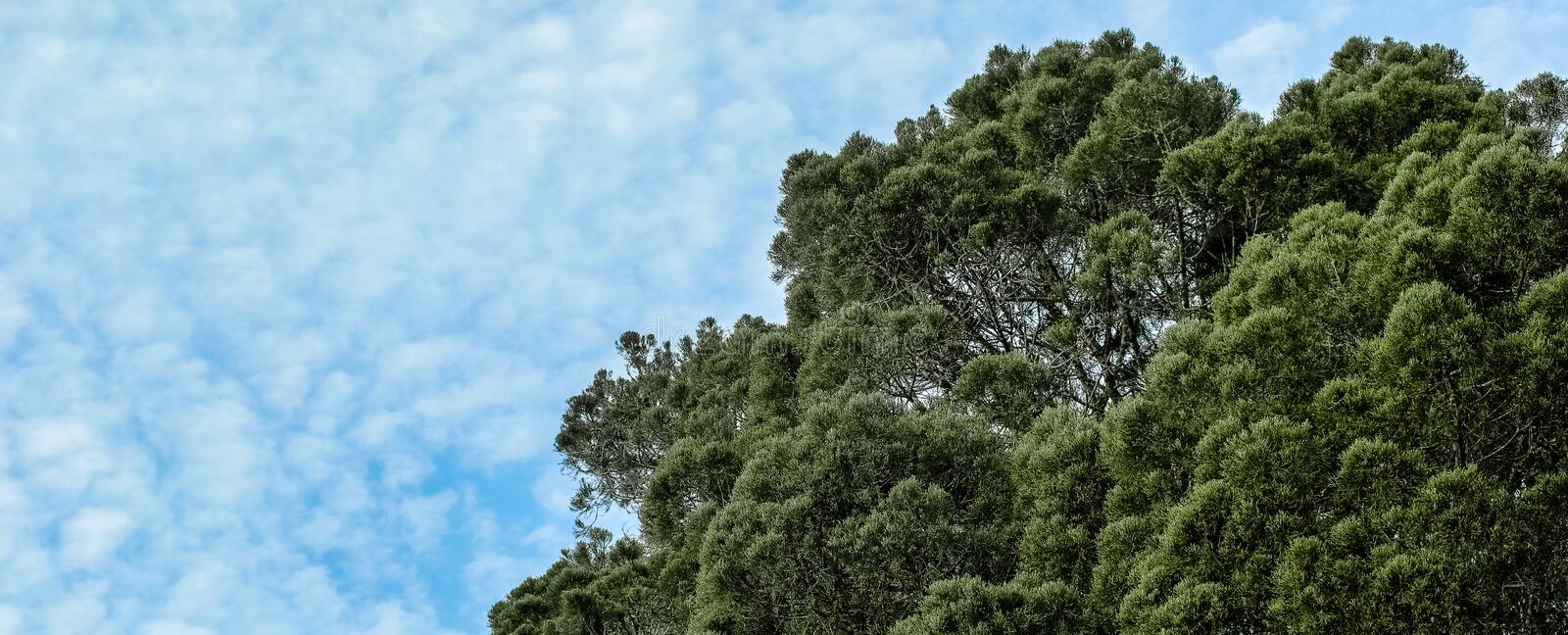 Tree top and blue skies royalty free stock image