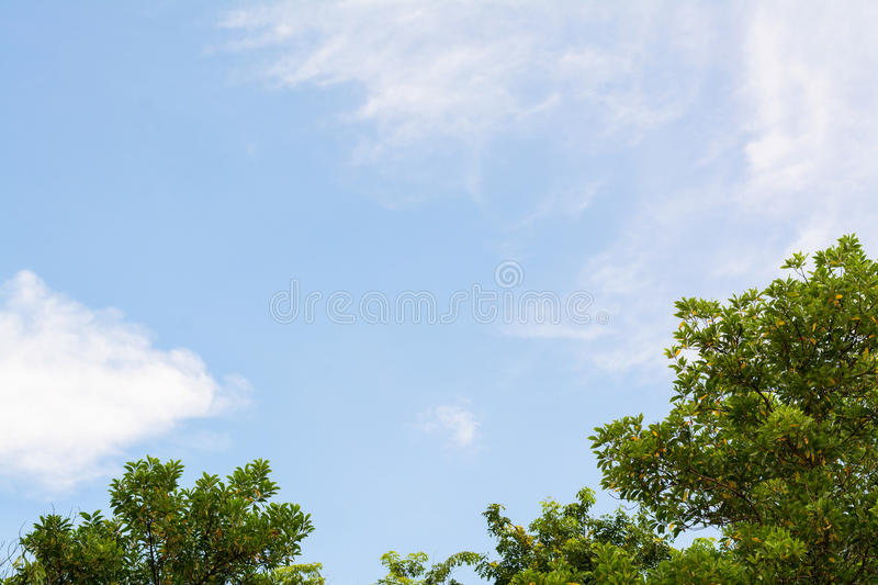 Tree top with blue sky background stock photos