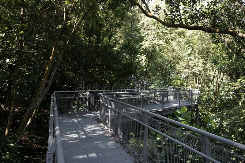 Tree top forest walk ,Southern Ridges trail in Singapore. Tree top forest walk over tropical rainforest during Southern Ridges trail in Singapore stock photos