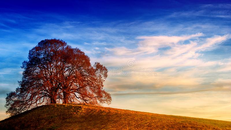 Tree on Top of Hill Under Blue Sky stock photo
