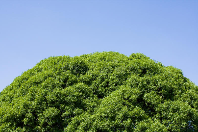 Download Tree Top Leaves On Blue Sky Stock Image - Image: 15096381