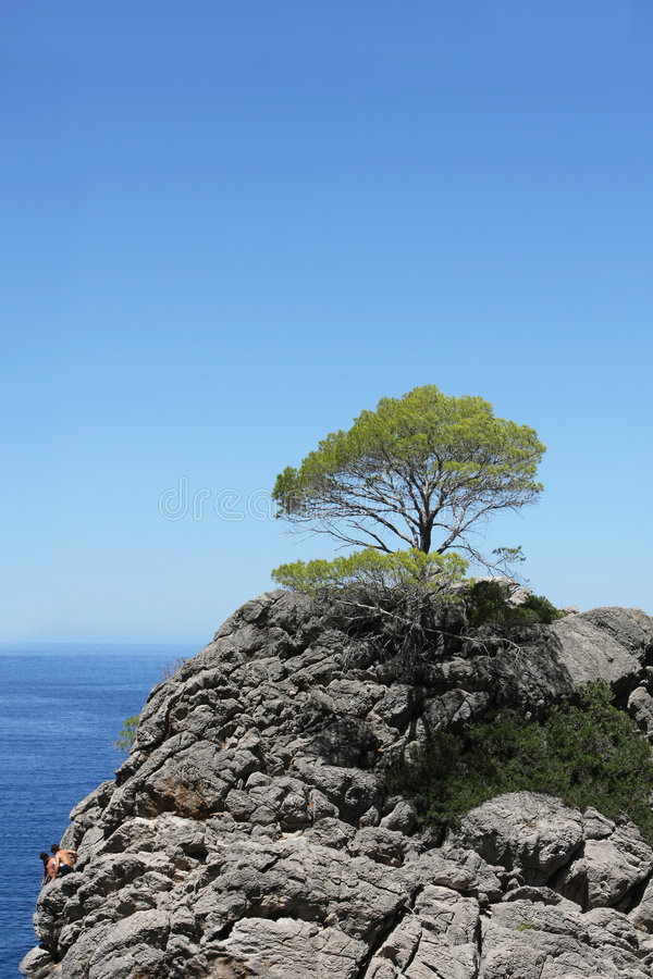 Download Tree On Top Of The Mountain Stock Image - Image: 8315399