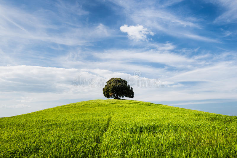 Tree on the top of small green hill royalty free stock image