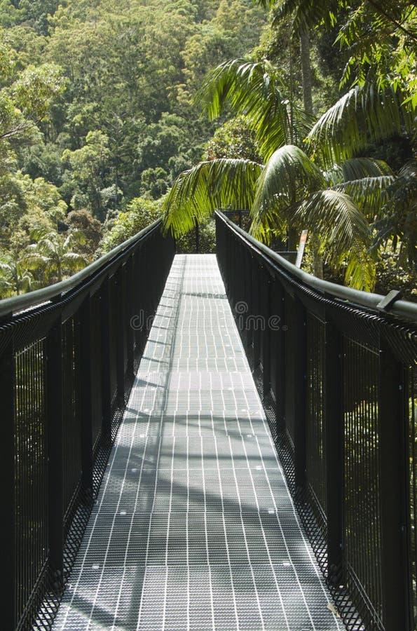 Download Tree top walk stock photo. Image of observatory, skywalk - 13449824