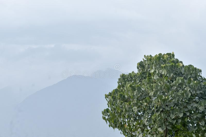 Tree top in winter snow covered and foggy mountain background. Cloudy himalayan Range and with Its Reflection the background. Winter landscape with distant stock photos