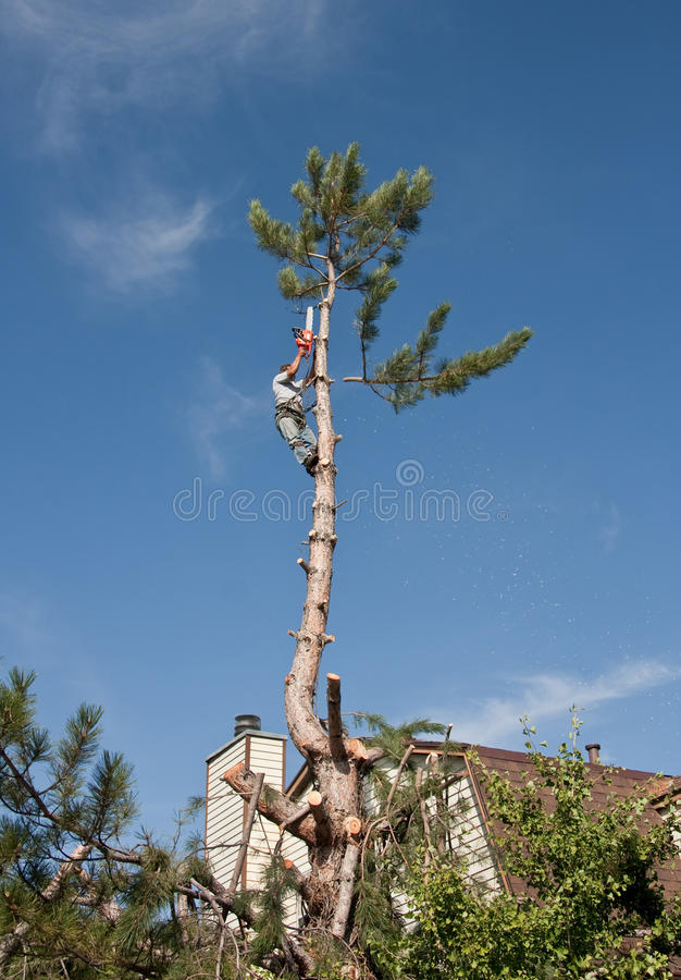 Download Tree topping and Removal stock photo. Image of hazard - 14885442