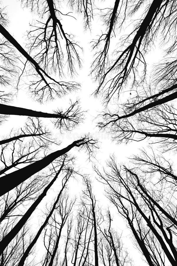 Free Tree Tops Stock Photo - 5677610
