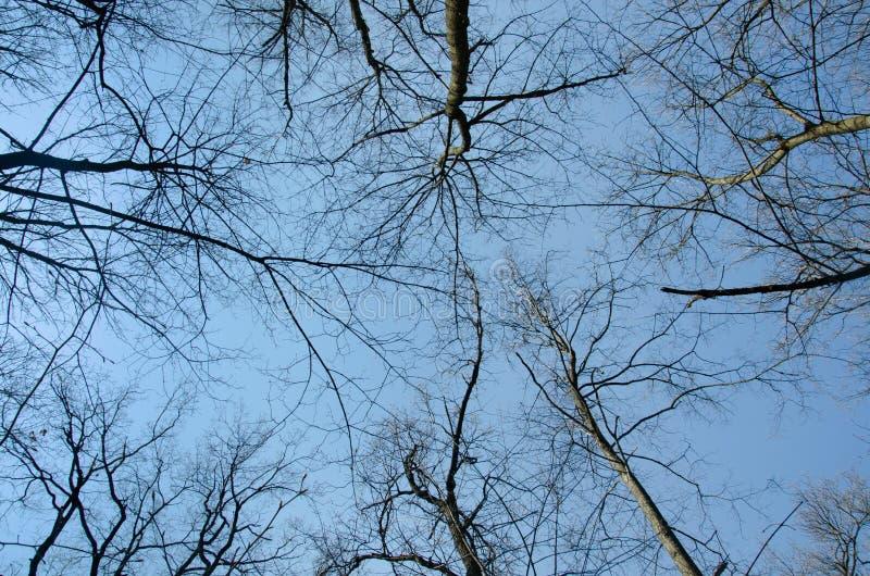 Tree tops against the sky. Spring, black. Tree tops against the sky. Spring Sunny day stock images