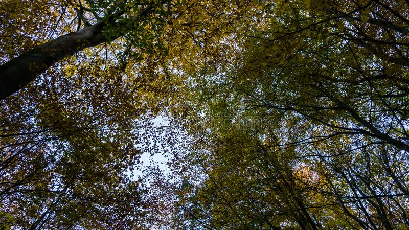 Tree tops in autumn. Forest royalty free stock photography