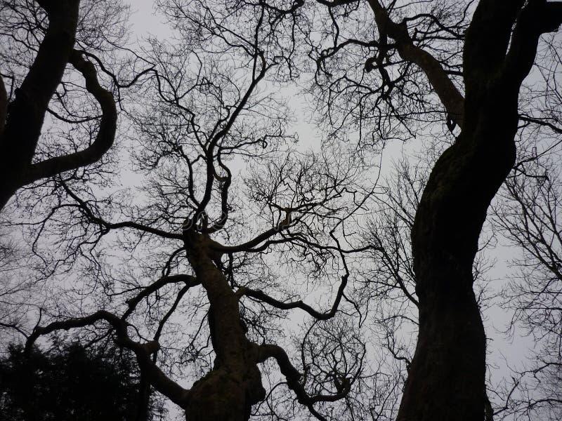 Tree tops. Black tree tops against the gray sky royalty free stock photography