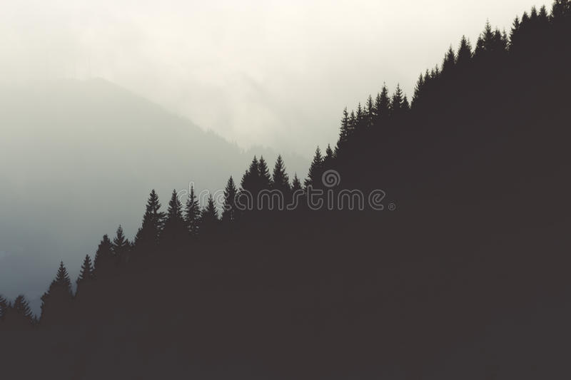 Tree tops royalty free stock photography