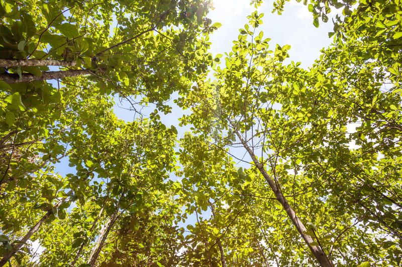 Tree tops. In the forest of Thailand on an beautiful day from tree tops royalty free stock photography