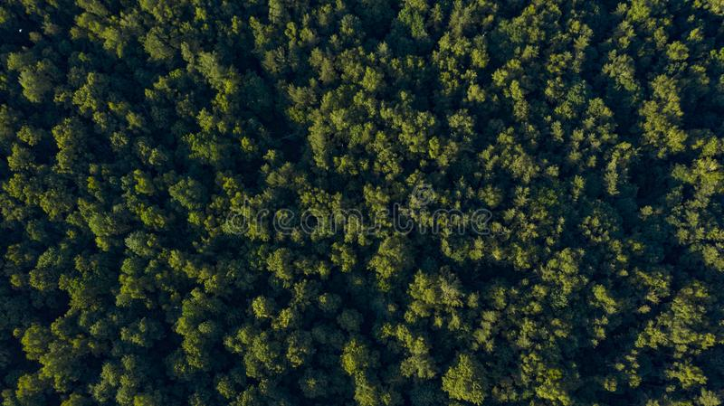 Green forest on sunset, overhead view stock photos