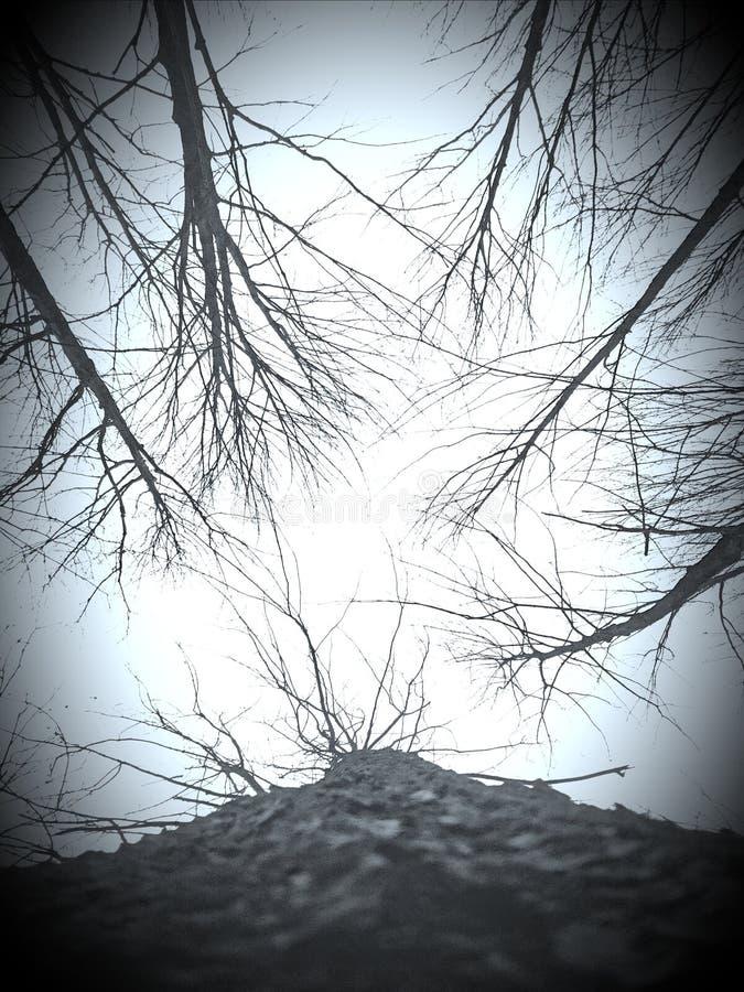 Tree tops in Michigan. Sky, november royalty free stock photography