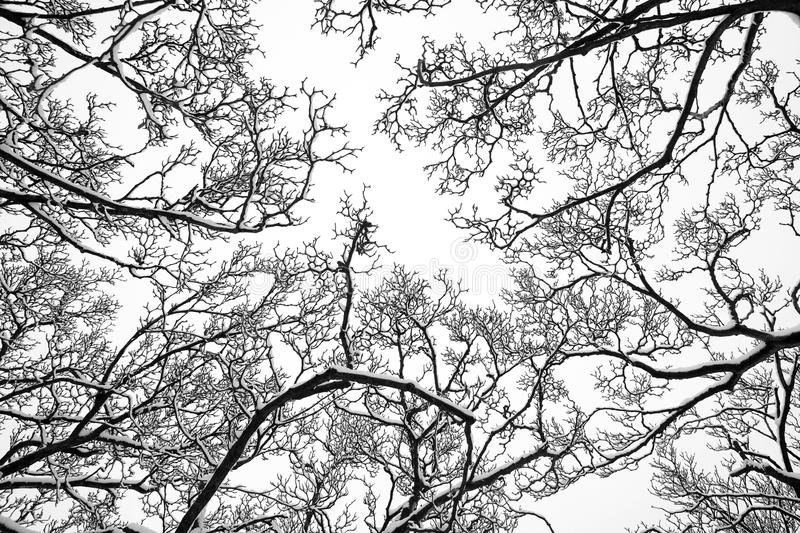 Tree tops in the snow. Tree tops in winter covered in snow royalty free stock images