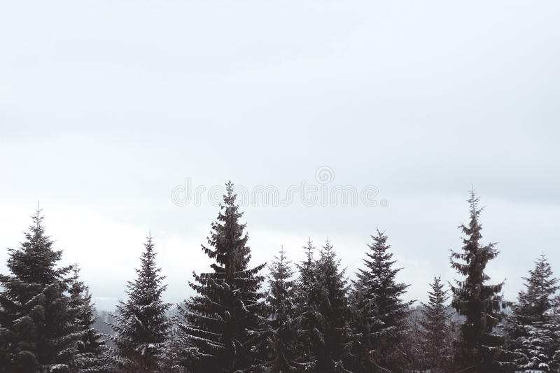 Tree tops. Snow covered tree tops with space for copy stock photography