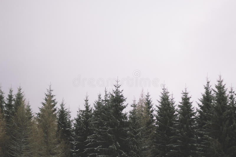 Tree tops. Snow covered tree tops with space for copy stock images
