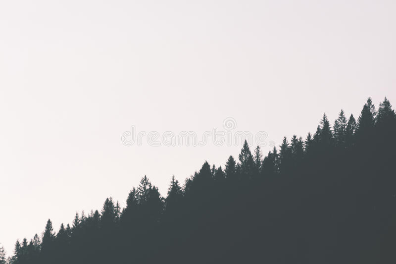 Tree tops. Snow covered tree tops with space for copy royalty free stock image