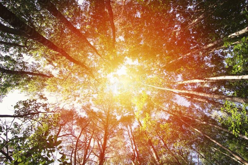 Tree tops in soft sunlight. Summer forest. Tree tops in sunlight. Summer forest stock image
