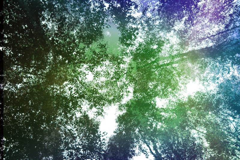 Tree tops in sunlight. Summer forest. Tree tops in morning sunlight. Summer forest royalty free stock photography