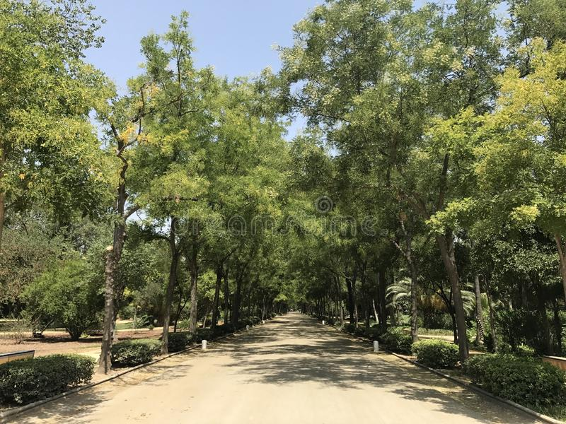 Tree trail in Maria Luisa Park royalty free stock photography