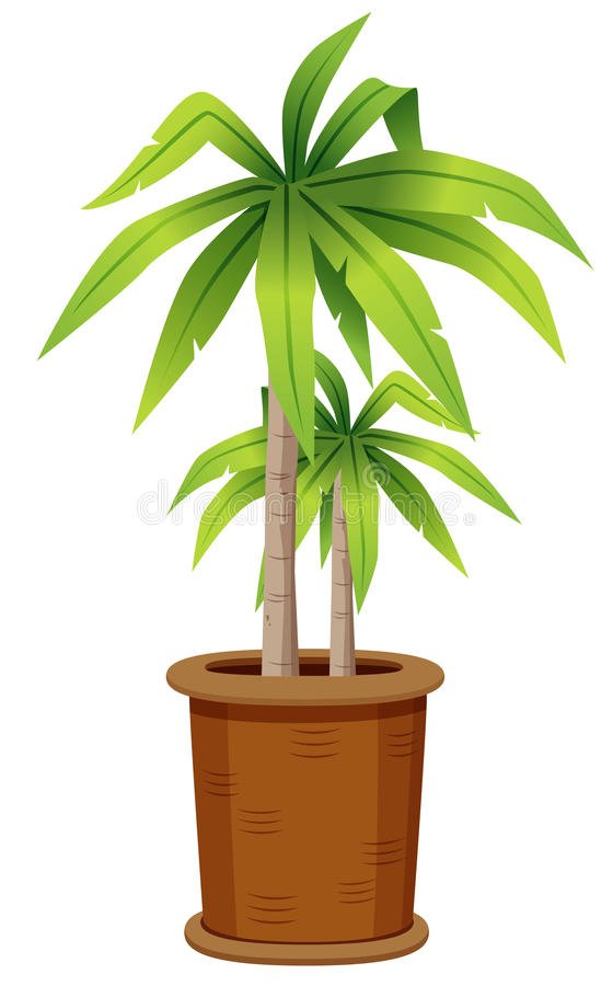 Tree in tree pot. Illustration of tree in tree pot.Vector stock illustration
