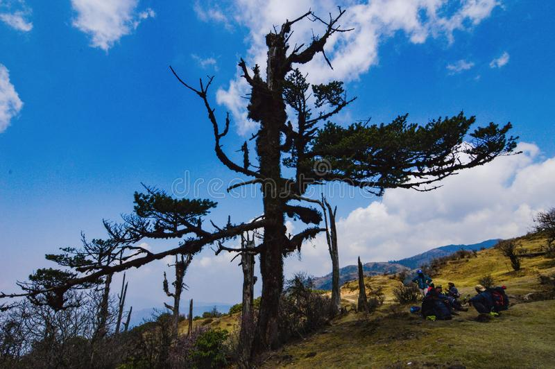 Tree on the trek of Sandakphu stock image