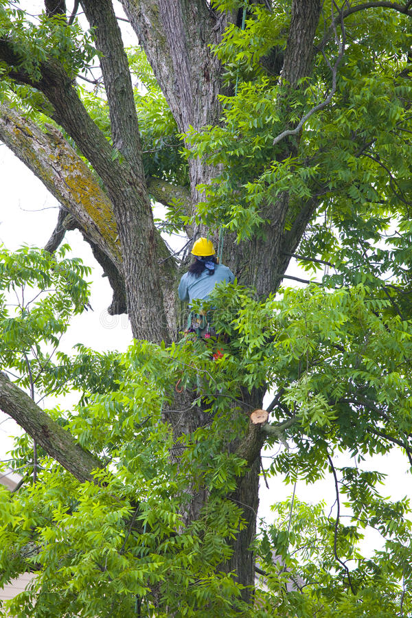 Tree Trimmer stock image