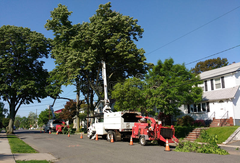 Tree Trimming, Rutherford, NJ, USA. It`s a beautiful, sunny day in Rutherford, New Jersey, as workers trim trees on Sylvan Street. This photo was taken on May stock images