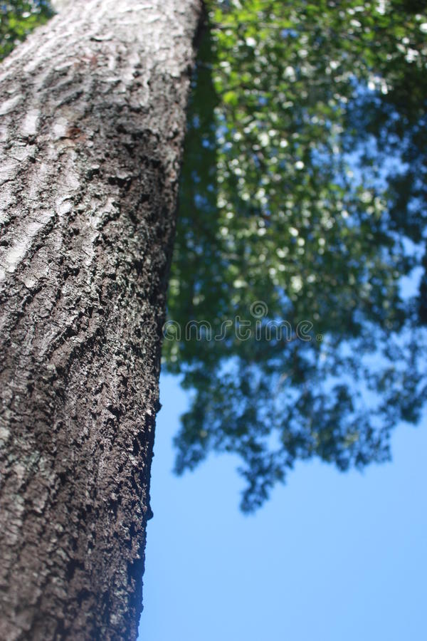 Download Tree Trunk stock image. Image of tree, leaves, outdoor - 12285317