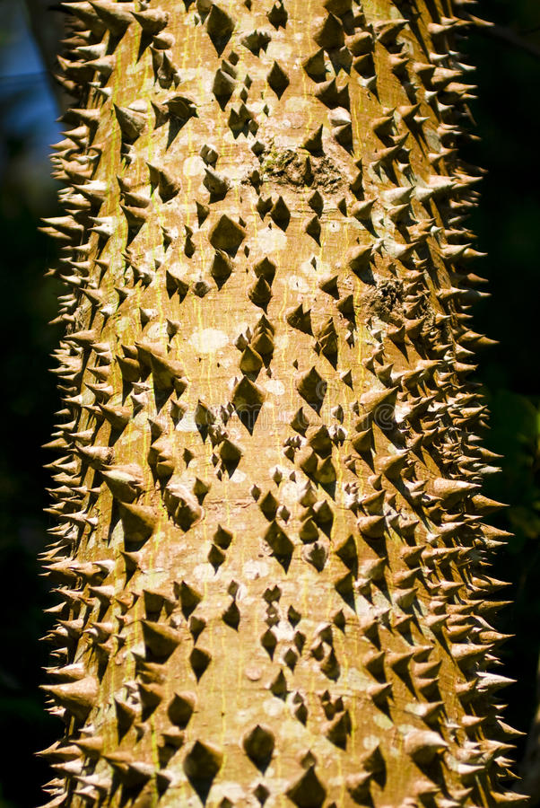 Download Tree Trunk stock photo. Image of trunk, full, thorns - 12448756