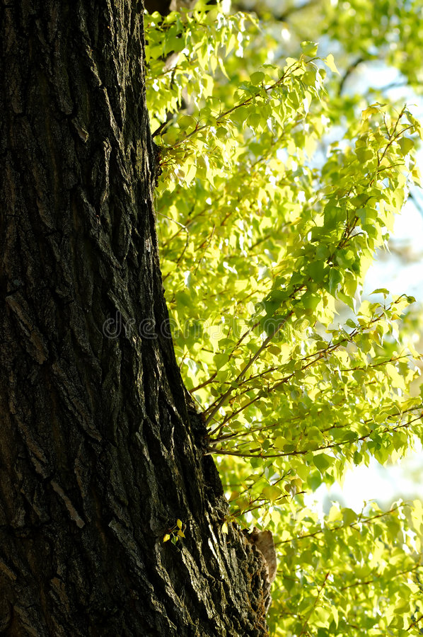 Download Tree trunk stock photo. Image of color, plants, distant - 2384308