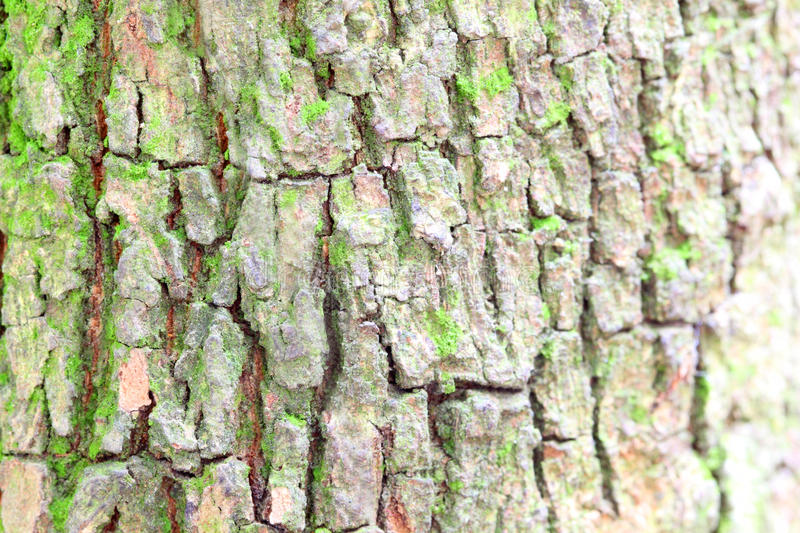 Download Tree trunk stock photo. Image of line, detail, close - 26418786