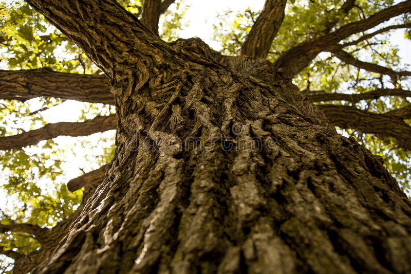 Tree-trunk royalty free stock photo