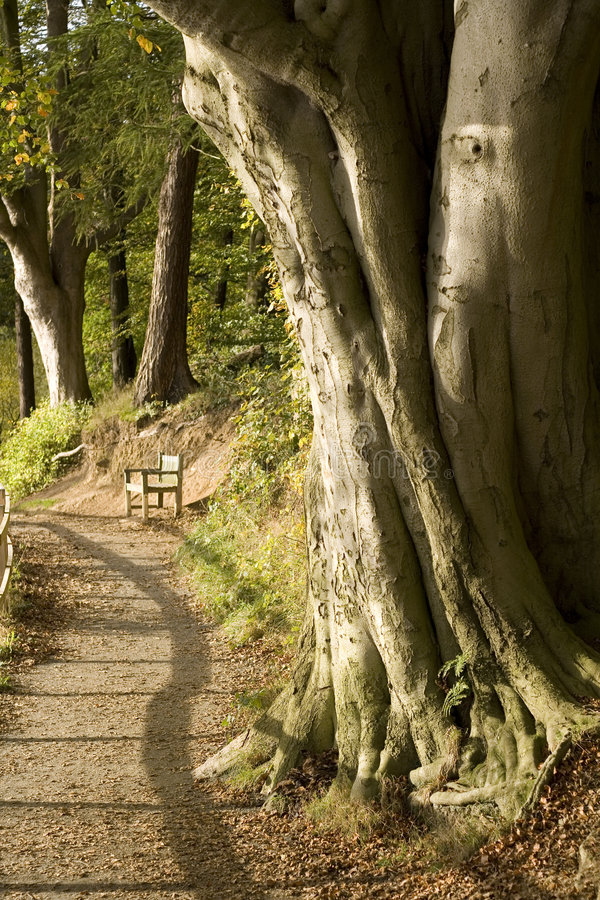 Free Tree Trunk And Path With Seat Stock Photo - 4325880