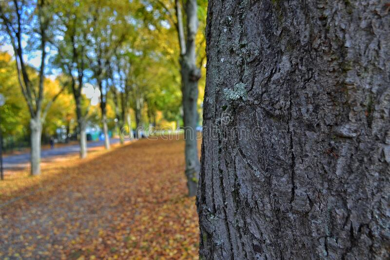 Tree trunk and autumn leaves royalty free stock photos
