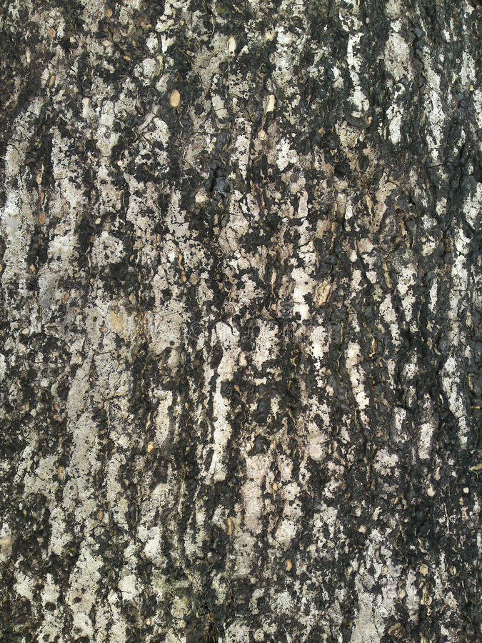 Tree Trunk Background royalty free stock image