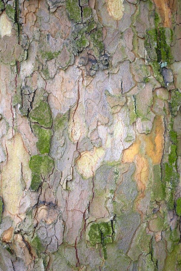 Download Tree trunk bark stock image. Image of peels, tree, background - 10579639