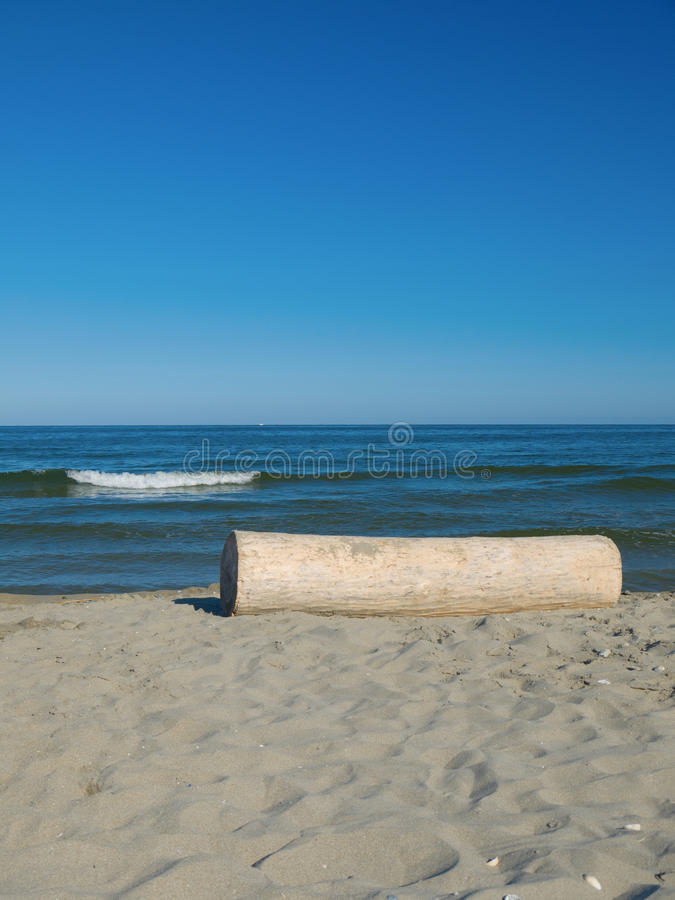 Download Tree trunk at the beach stock image. Image of wave, trunk - 26537067