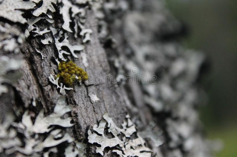 Tree, Trunk, Branch, Close Up stock image
