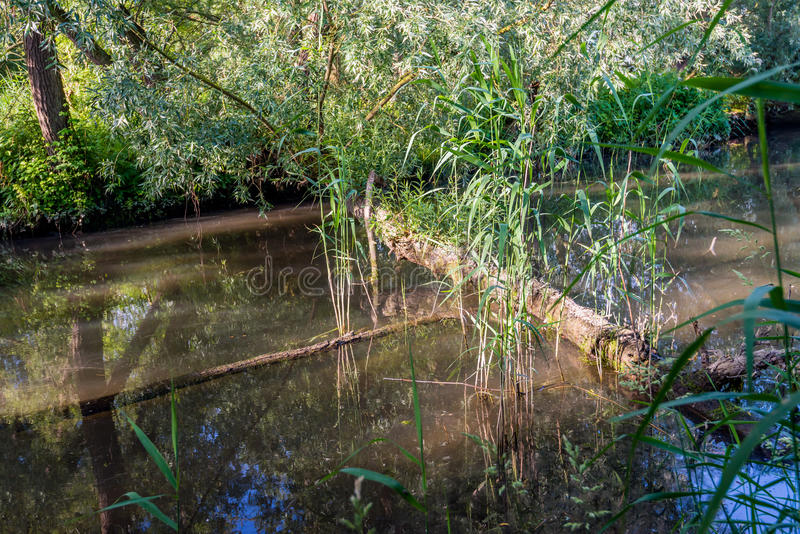 Download Tree Trunk And Branch Fallen In The Creek Stock Image - Image: 83702971