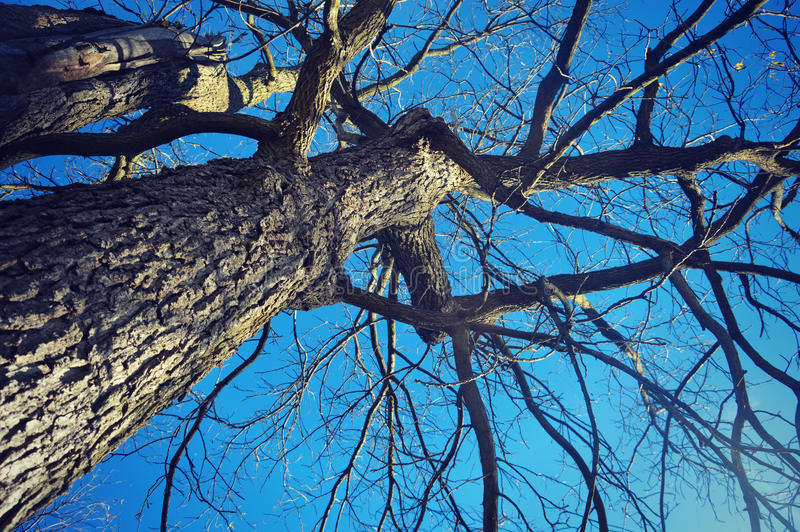 Tree Trunk and Branches royalty free stock image