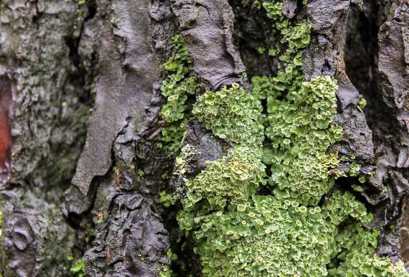 Tree trunk is covered with Green Moss stock image