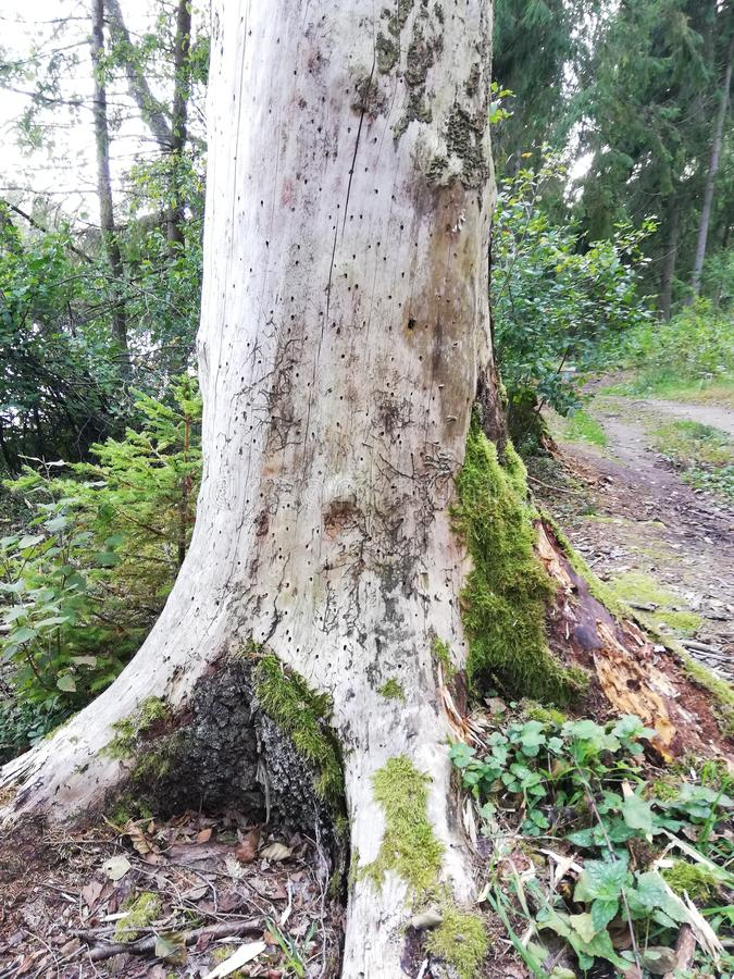 Tree trunk covered by green moss royalty free stock photo