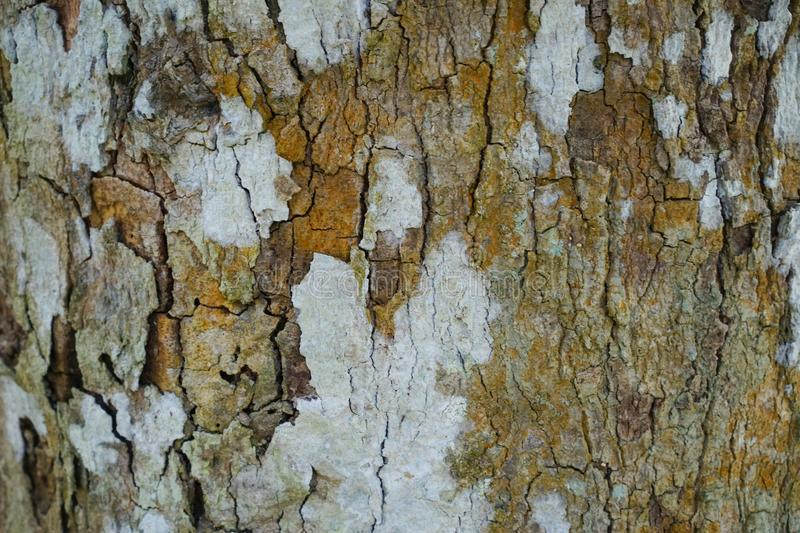 Tree trunk detail texture as natural background. Bark tree texture wallpaper. Durian tree Bark. Abstract background. stock images