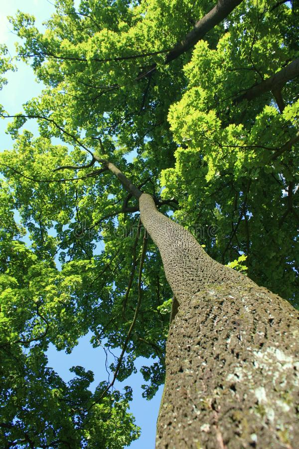 Download Tree Trunk  Environment Ecology Natural Stock Image - Image of wood, treetops: 15952957