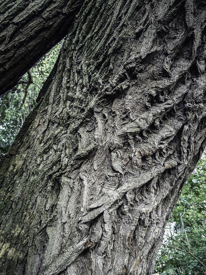 Tree trunk with fascinating contours stock photo