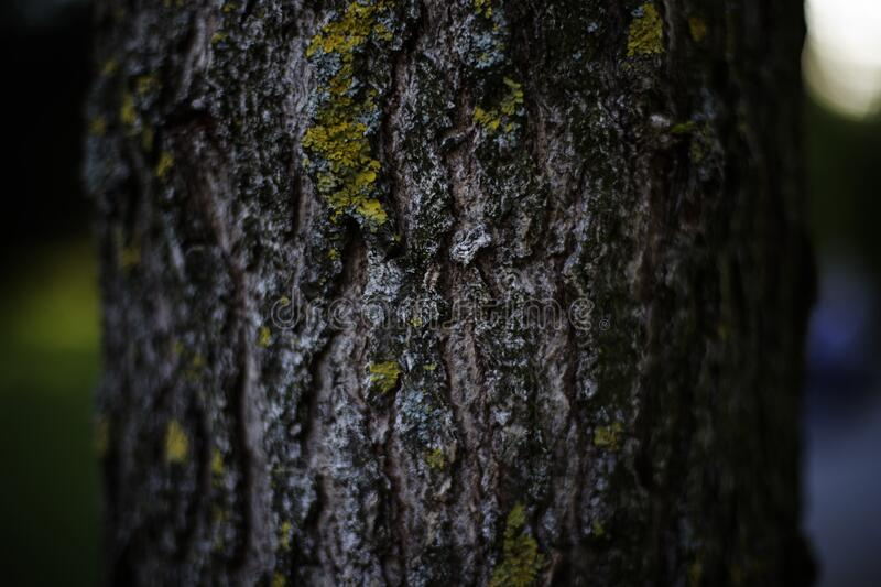 Tree Trunk With Green Moss royalty free stock images