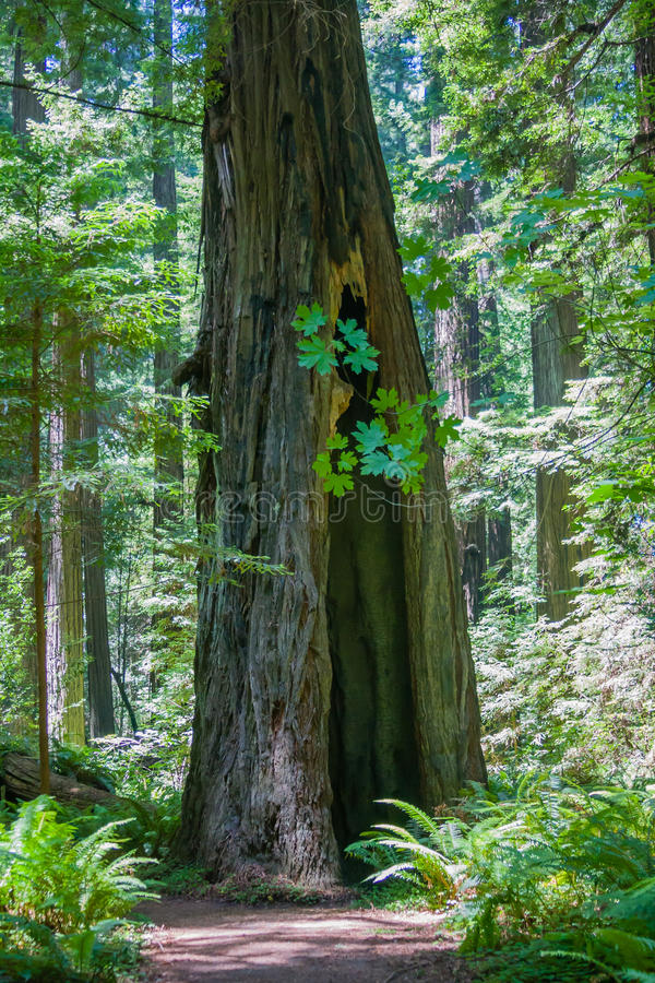Tree trunk hole stock photography