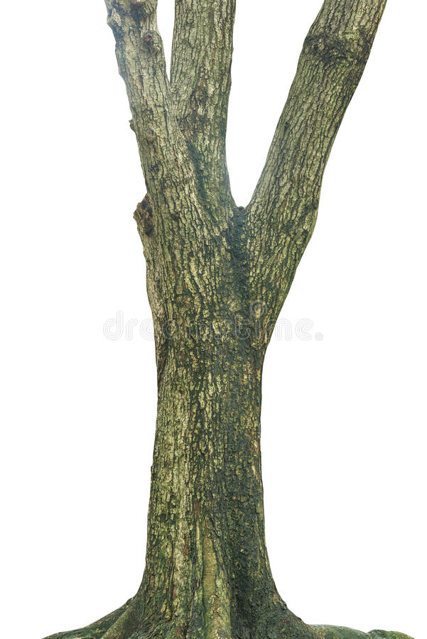 Free Tree Trunk Isolated On White Stock Images - 86652914